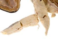 Fruta del baobab imagen de archivo libre de regalías
