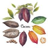 Fruta del cacao de la acuarela ilustración del vector