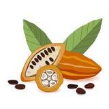 Fruta del cacao, habas crudas del cacao con las hojas, vaina del cacao en el fondo blanco Foto de archivo libre de regalías