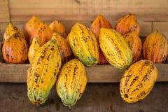 Fruta del cacao, habas crudas del cacao, fondo de la vaina del cacao fotografía de archivo