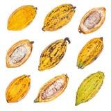 Fruta del cacao, habas crudas del cacao, vaina del cacao aislada en el backgr blanco foto de archivo libre de regalías