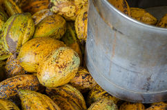 Fruta del cacao y cacao en el cubo Imagen de archivo libre de regalías