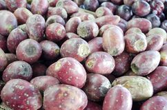 Fruta del cactus del higo chumbo Fotos de archivo