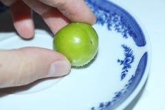 Fruta del ciruelo Imagen de archivo libre de regalías