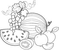 Fruta del colorante ilustración del vector