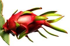 Fruta del dragón en el fondo blanco Fotografía de archivo libre de regalías