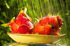Fruta del dragón en la lluvia Imágenes de archivo libres de regalías