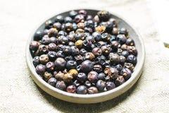 Fruta del enebro Imagen de archivo libre de regalías