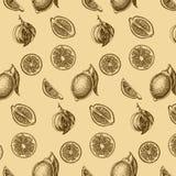Fruta del fondo del bosquejo del vector citrus stock de ilustración