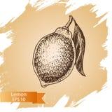 Fruta del fondo del bosquejo del vector citrus libre illustration