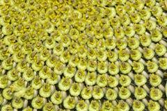 Fruta del girasol foto de archivo libre de regalías