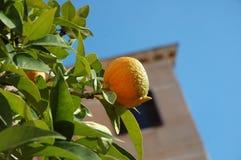 Fruta del invierno imagen de archivo