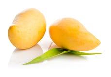 Fruta del mango aislada foto de archivo libre de regalías