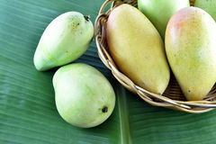 Fruta del mango en cesta en la hoja del plátano Foto de archivo libre de regalías