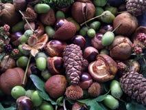 Fruta del otoño imagenes de archivo