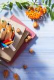 Fruta del otoño de la escuela de la parte posterior del concepto de los libros de los lápices Imágenes de archivo libres de regalías