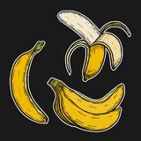 Fruta del plátano, manojo ilustración del vector