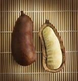 Fruta del stilbocarpa del Hymenaea Fotos de archivo libres de regalías