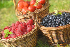 Fruta del verano Fotografía de archivo libre de regalías