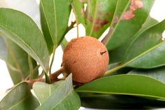 Fruta del zapote fotos de archivo libres de regalías