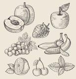 Fruta dibujada mano Imágenes de archivo libres de regalías