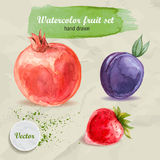 Fruta dibujada mano de la acuarela fijada en el papel Granada, ciruelo y fresa rojos Fotos de archivo