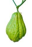 Fruta do Chayote isolada Foto de Stock