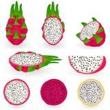 Fruta do dragão ilustração do vetor
