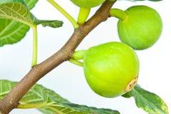 Fruta do figo Fotografia de Stock