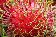 Fruta do Rambutan fotografia de stock royalty free