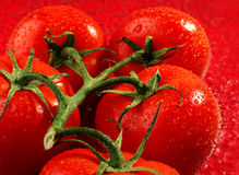Fruta do tomate Fotografia de Stock Royalty Free