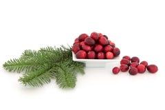 Fruta e abeto vermelho da airela Fotografia de Stock Royalty Free