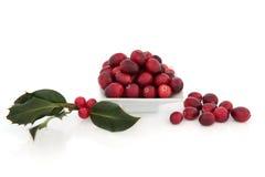 Fruta e azevinho da airela Fotos de Stock