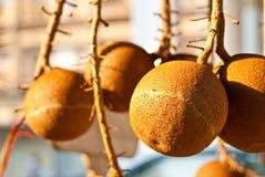 Fruta en luz del sol Imagen de archivo