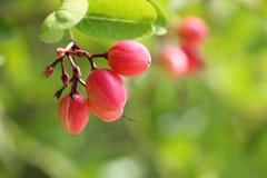 Fruta estupenda Fotografía de archivo