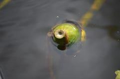 Fruta formada botella Imagen de archivo