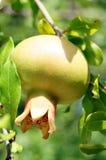 Fruta fresca Imagen de archivo libre de regalías