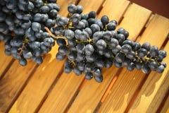 Fruta fresca de la baya o de la uva en huerta, fruta limpia o fondo popular de la fruta, fruta del mercado de la huerta de la agr Fotografía de archivo