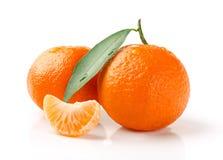 Fruta fresca de la mandarina Fotos de archivo libres de regalías