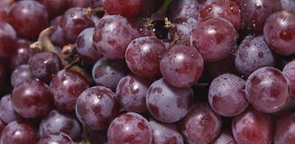 Fruta fresca de la uva Fotografía de archivo libre de regalías