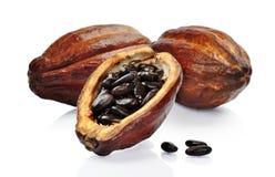 Fruta fresca del cacao Imágenes de archivo libres de regalías