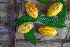 Fruta fresca del cacao en el saco marrón imagenes de archivo