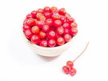 Fruta fresca del espino El concepto de medicina alternativa Imágenes de archivo libres de regalías