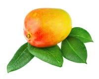 Fruta fresca del mango con las hojas del verde aisladas en el fondo blanco Imágenes de archivo libres de regalías