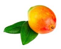 Fruta fresca del mango con las hojas del verde aisladas en el fondo blanco Imagen de archivo