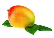 Fruta fresca del mango con las hojas del verde aisladas en el fondo blanco Foto de archivo libre de regalías