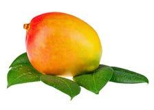Fruta fresca del mango con las hojas del verde aisladas en el fondo blanco Fotografía de archivo