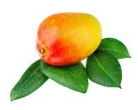 Fruta fresca del mango con las hojas del verde aisladas en el fondo blanco Foto de archivo