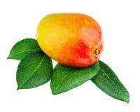 Fruta fresca del mango con las hojas del verde aisladas en el fondo blanco Fotos de archivo libres de regalías