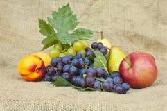 Fruta fresca del otoño Fotos de archivo libres de regalías